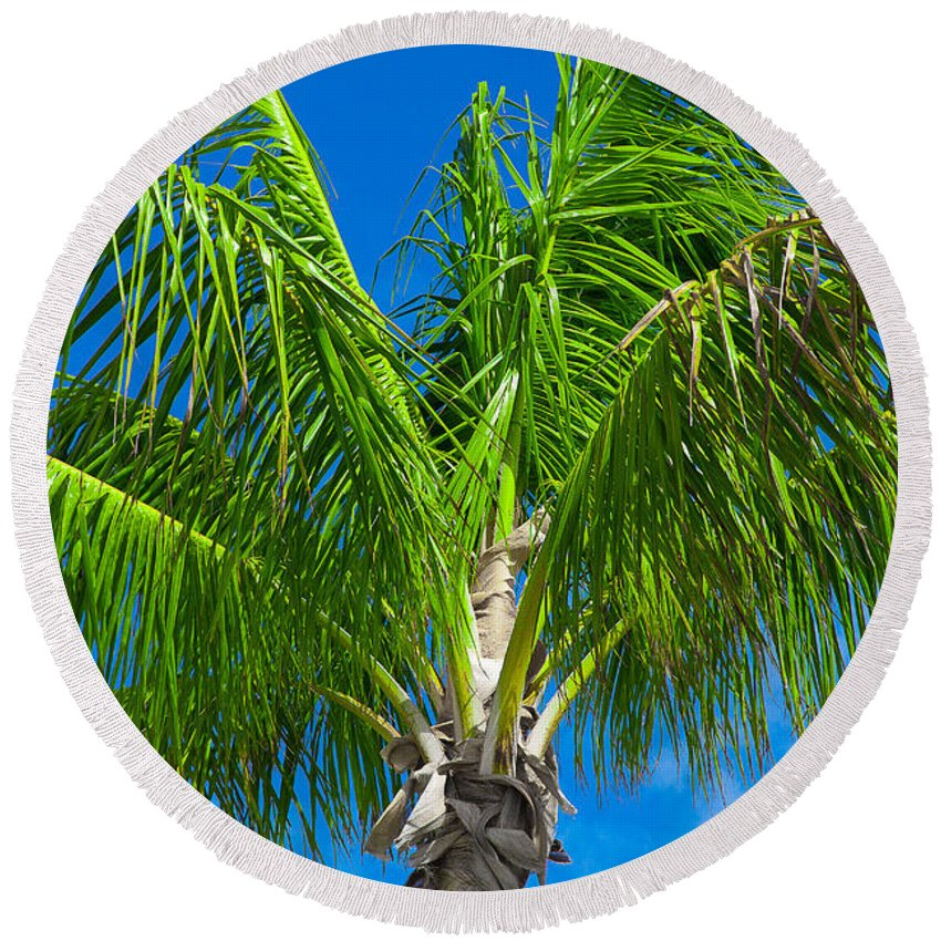 Palm Round Beach Towel featuring the photograph Tropical Palm Portrait by Kimberly Blom-Roemer