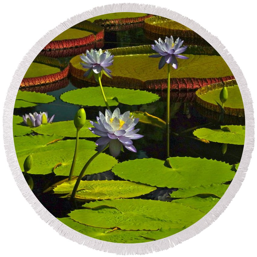 Nymphaea Round Beach Towel featuring the photograph Tropical Water Lily Flowers And Pads by Byron Varvarigos
