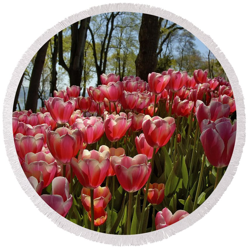 Tulip Round Beach Towel featuring the photograph Tulip Festival by Ayhan Altun