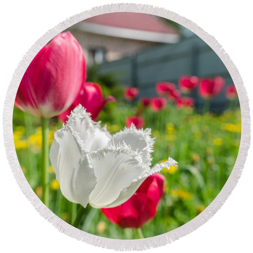House Round Beach Towel featuring the photograph Tulip Garden by Michael Goyberg