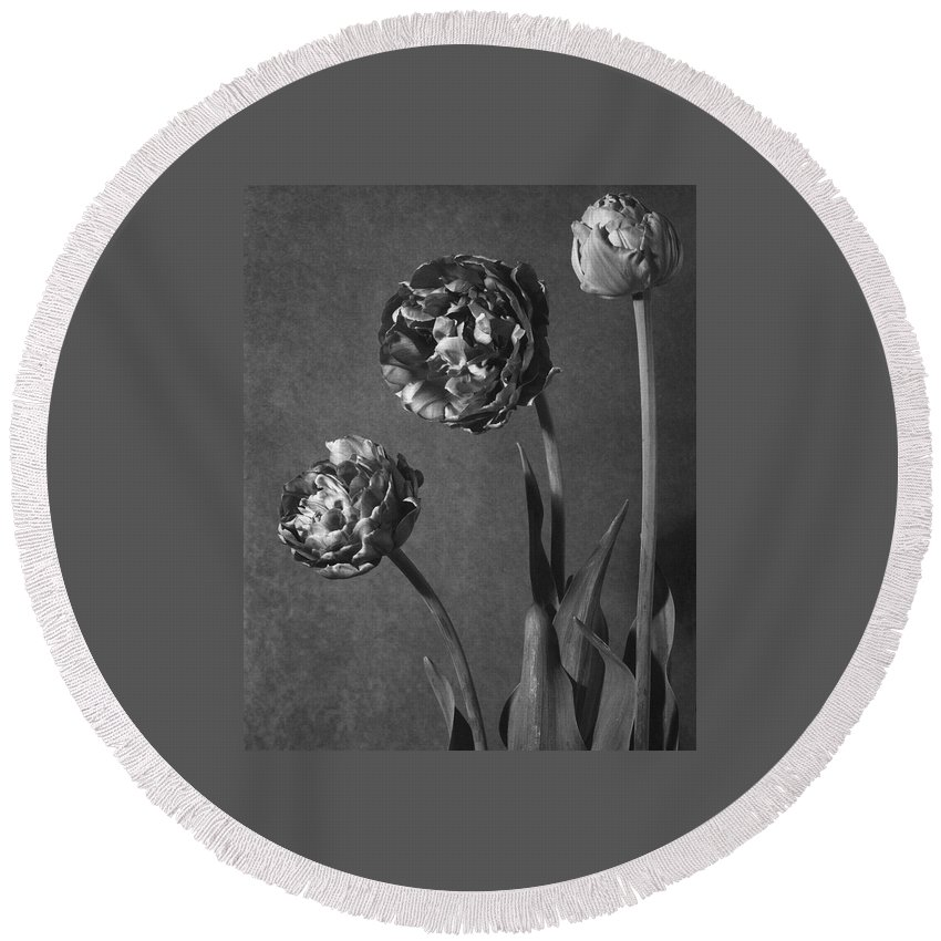 Flowers Round Beach Towel featuring the photograph Tulip Pensee Roses by Walter Beebe Wilder