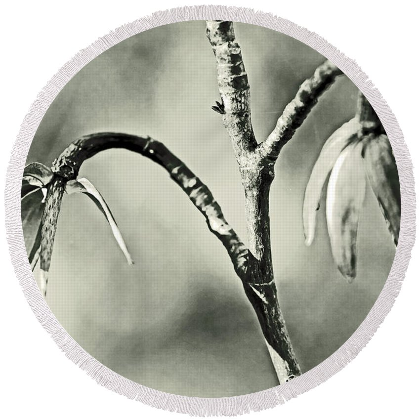 Tree Round Beach Towel featuring the photograph Tulip Poplar Empty Seed Heads - Black And White by Mother Nature