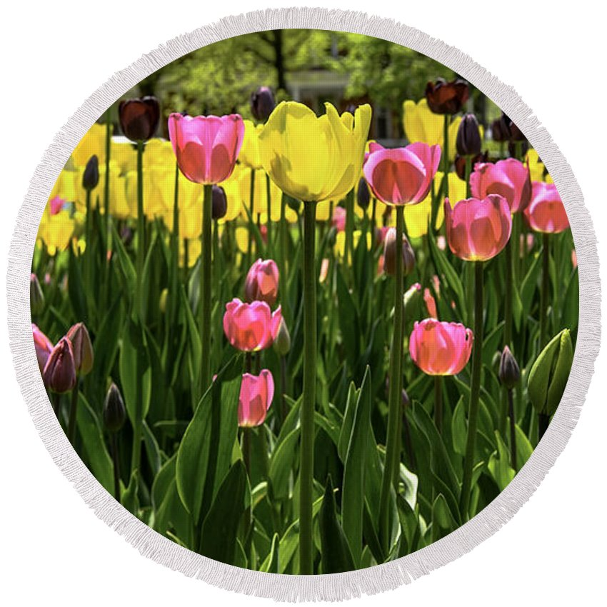 Usa Round Beach Towel featuring the photograph Tulip Time Pink Yellow Black Beauty by LeeAnn McLaneGoetz McLaneGoetzStudioLLCcom