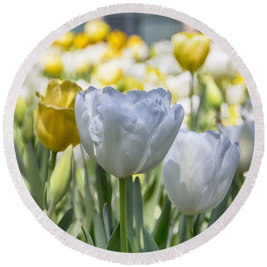Tulips Round Beach Towel featuring the photograph Tulips At Dallas Arboretum V28 by Douglas Barnard