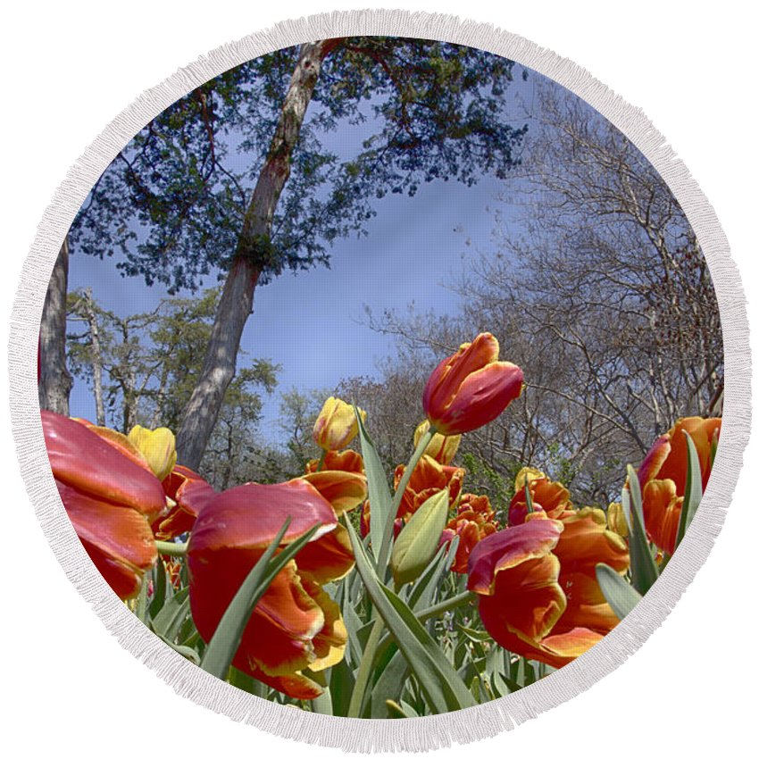Tulips Round Beach Towel featuring the photograph Tulips At Dallas Arboretum V37 by Douglas Barnard
