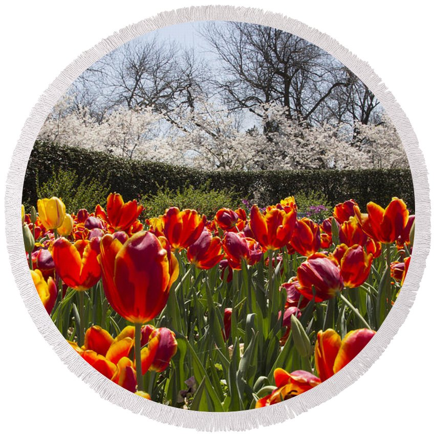 Tulips Round Beach Towel featuring the photograph Tulips At Dallas Arboretum V39 by Douglas Barnard