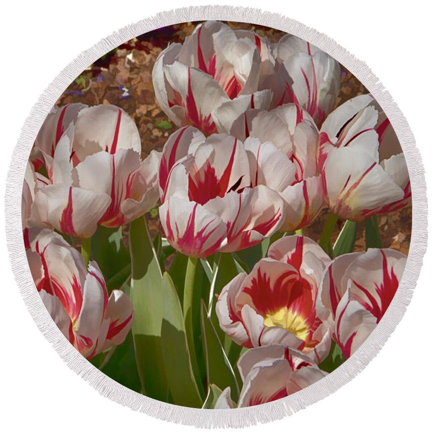 Tulips Round Beach Towel featuring the photograph Tulips At Dallas Arboretum V53 by Douglas Barnard