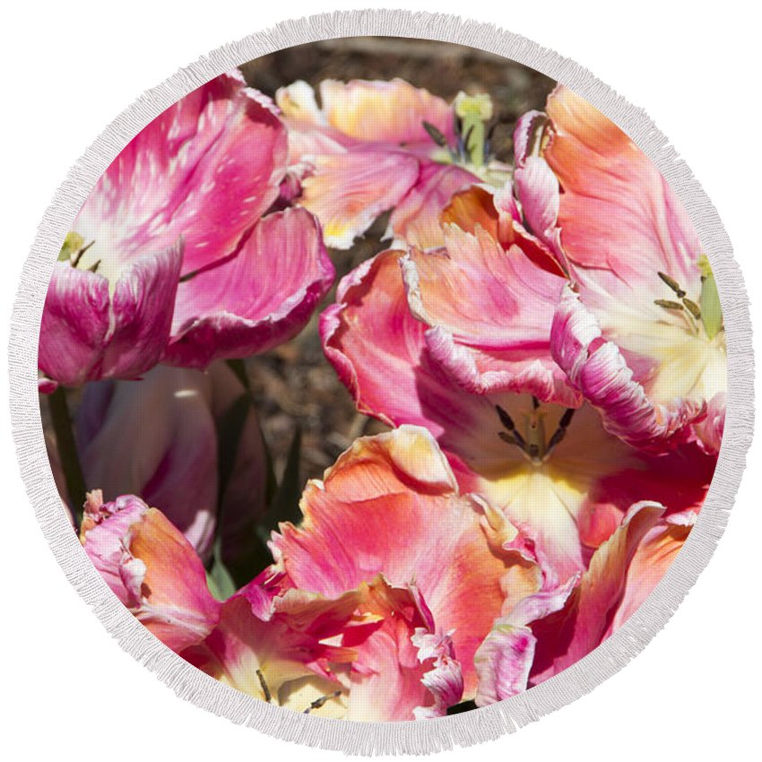 Tulips Round Beach Towel featuring the photograph Tulips At Dallas Arboretum V58 by Douglas Barnard