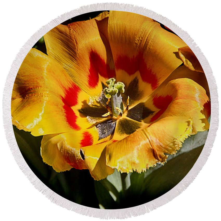 Tulips Round Beach Towel featuring the photograph Tulips At Dallas Arboretum V67 by Douglas Barnard