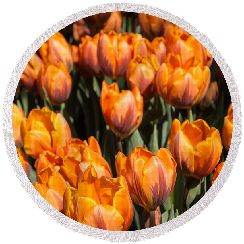 Tulips Round Beach Towel featuring the photograph Tulips Galore by Georgia Mizuleva