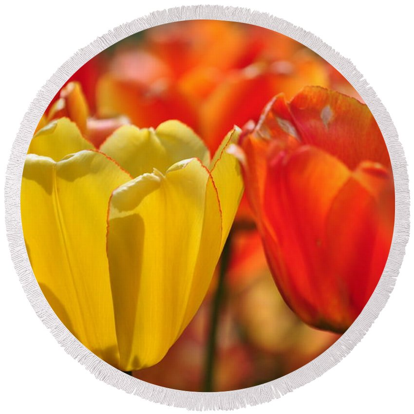 Tulip Round Beach Towel featuring the photograph Tulips In The Midst by Thomas Shockey