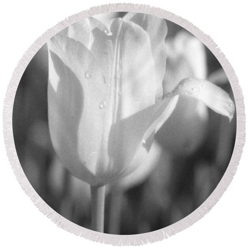 Tulip Round Beach Towel featuring the photograph Tulips - Infrared 09 by Pamela Critchlow