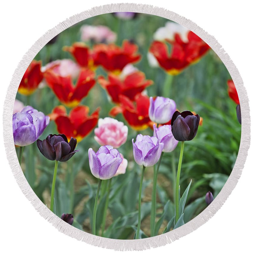 Garden Round Beach Towel featuring the photograph Tulips by Ivan Slosar