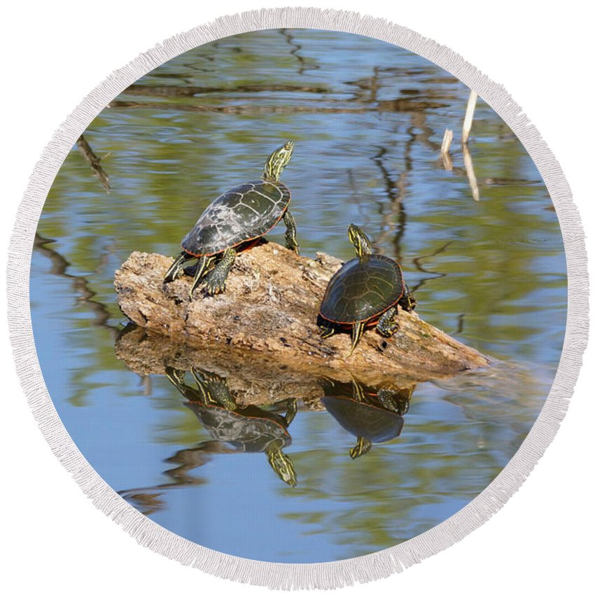 Turtles Round Beach Towel featuring the photograph Turtles On Stump by Lori Tordsen