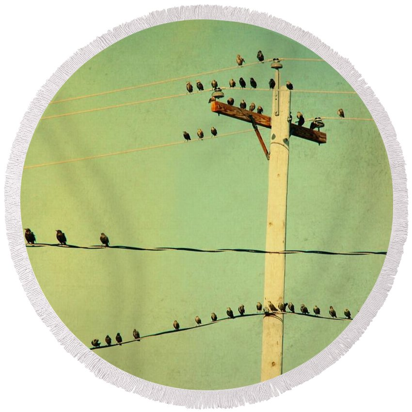 Retro Color Round Beach Towel featuring the photograph Tweeters Tweeting by Gothicrow Images