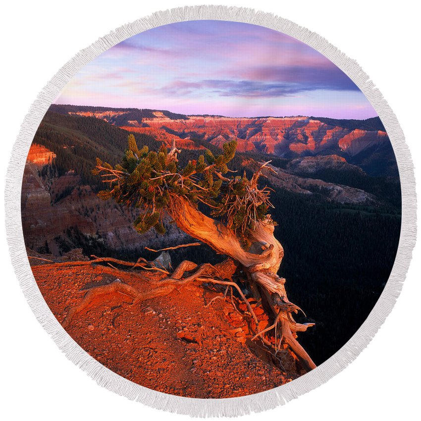 Twisted Forest Round Beach Towel featuring the photograph Twisted Forest by Leland D Howard