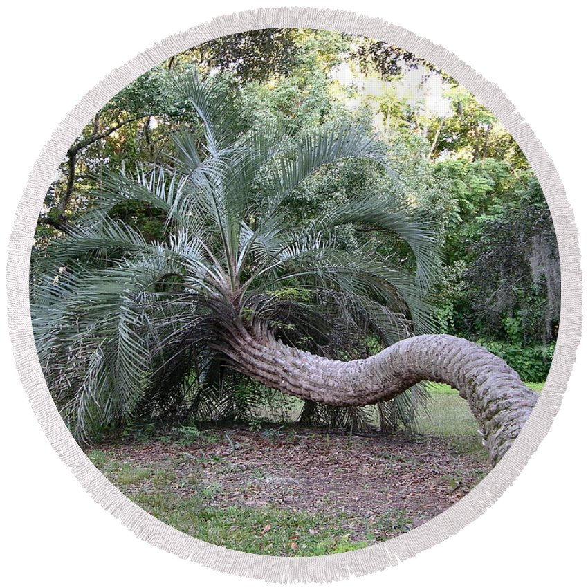 Scenery Round Beach Towel featuring the photograph Twisted Palm by Louis Yamonico
