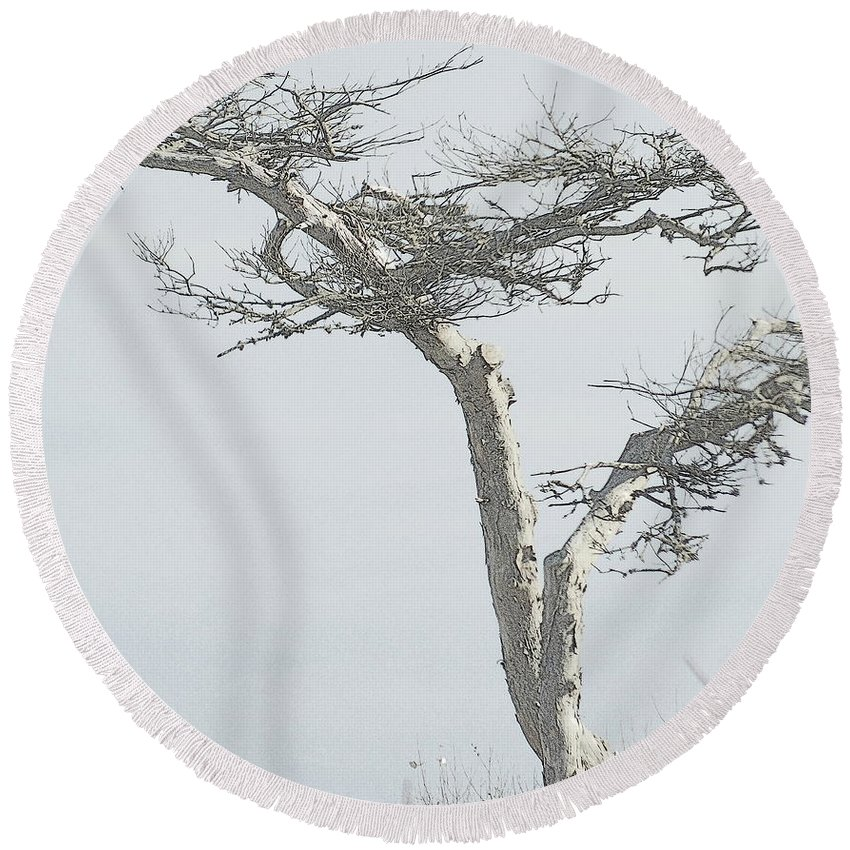 Twisted Tree Round Beach Towel featuring the photograph Twisted Tree 2 by Kathy Barney