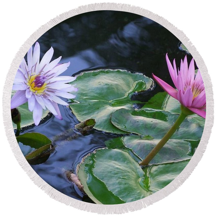 Water Lily Round Beach Towel featuring the photograph Two Beauties by Mary Deal