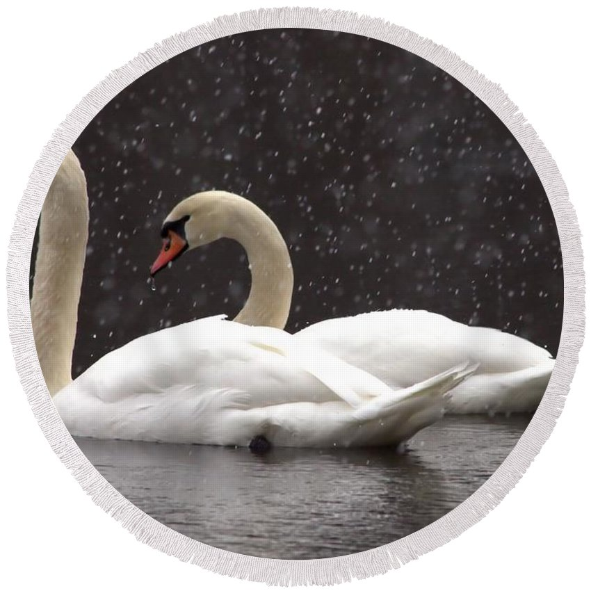 Swan Round Beach Towel featuring the photograph Two Christmas Swans A Swimming by Kenny Glotfelty
