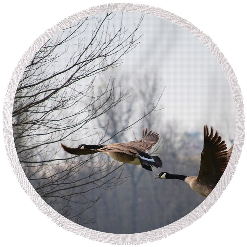 Tags: Great Blue Heron Photographs Round Beach Towel featuring the photograph Two Geese In Flight by Vernis Maxwell