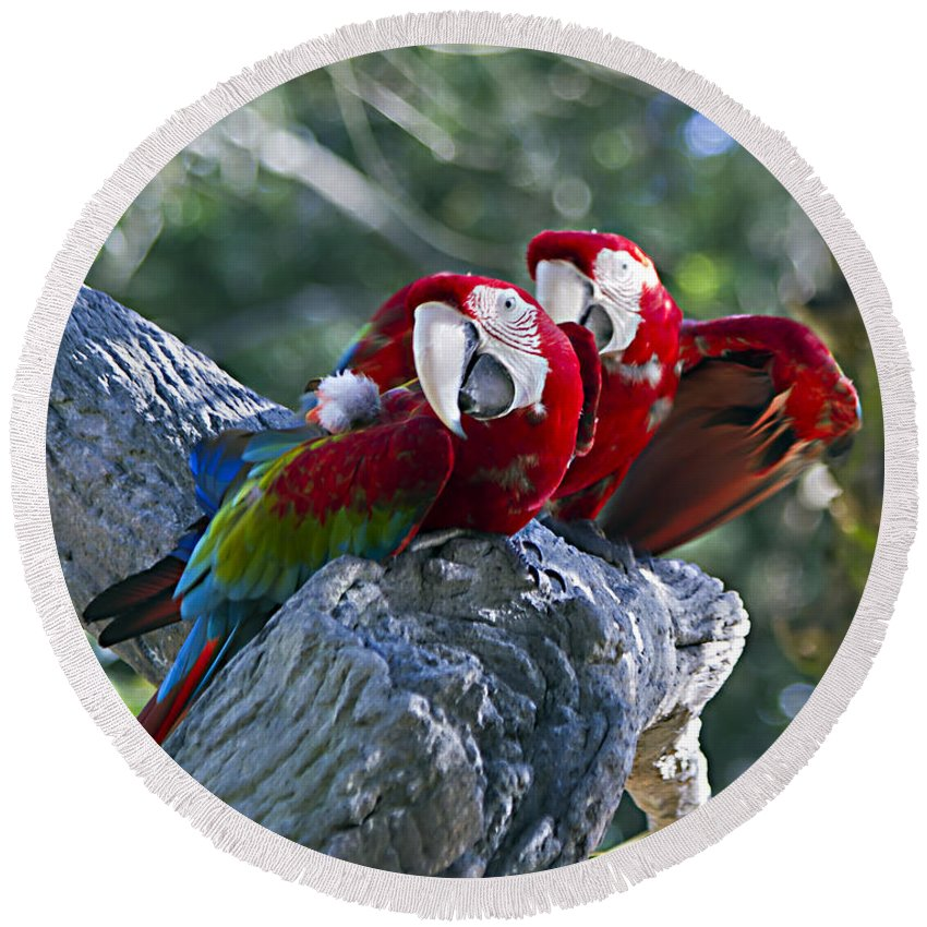 Birds Round Beach Towel featuring the photograph Two On A Branch Two by Ken Frischkorn