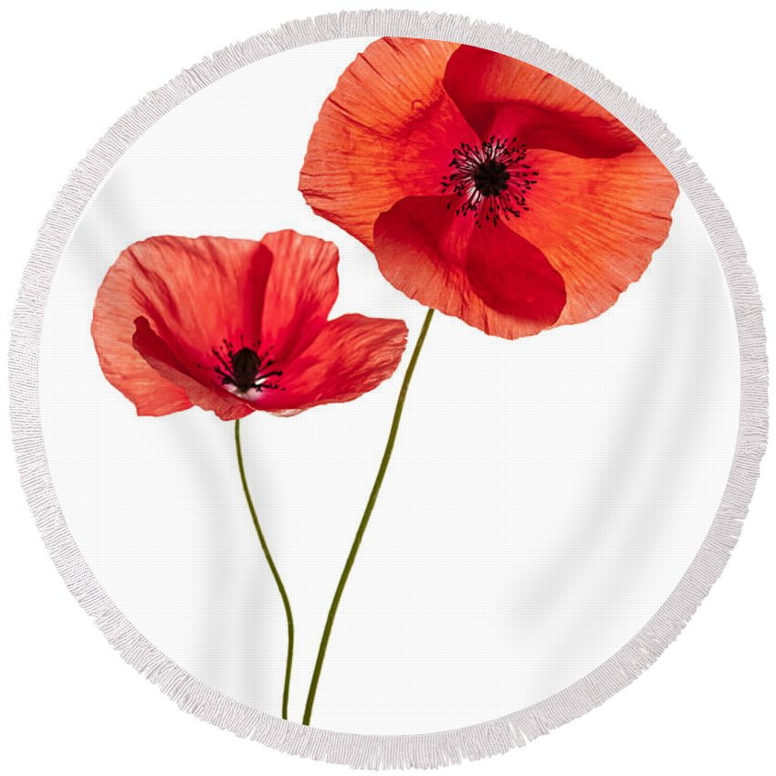 Two poppy flowers round beach towel for sale by elena elisseeva poppy round beach towel featuring the photograph two poppy flowers by elena elisseeva mightylinksfo