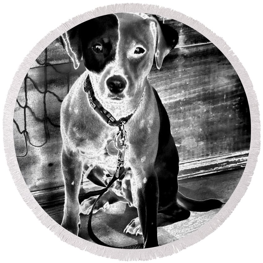 Dogs Round Beach Towel featuring the photograph Two Tone Toby-jack Russell by Robert McCubbin