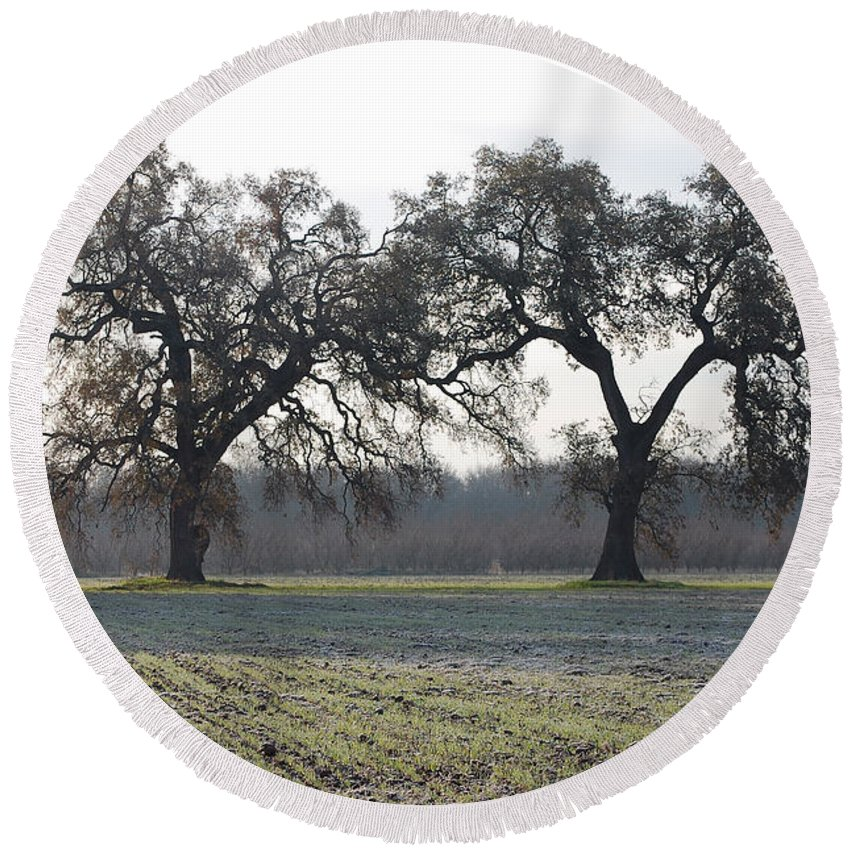 Two Tree Trees Frosty Field Morning Vineyard Vina Ca Round Beach Towel featuring the photograph Two Tree Frosty Morning by Holly Blunkall