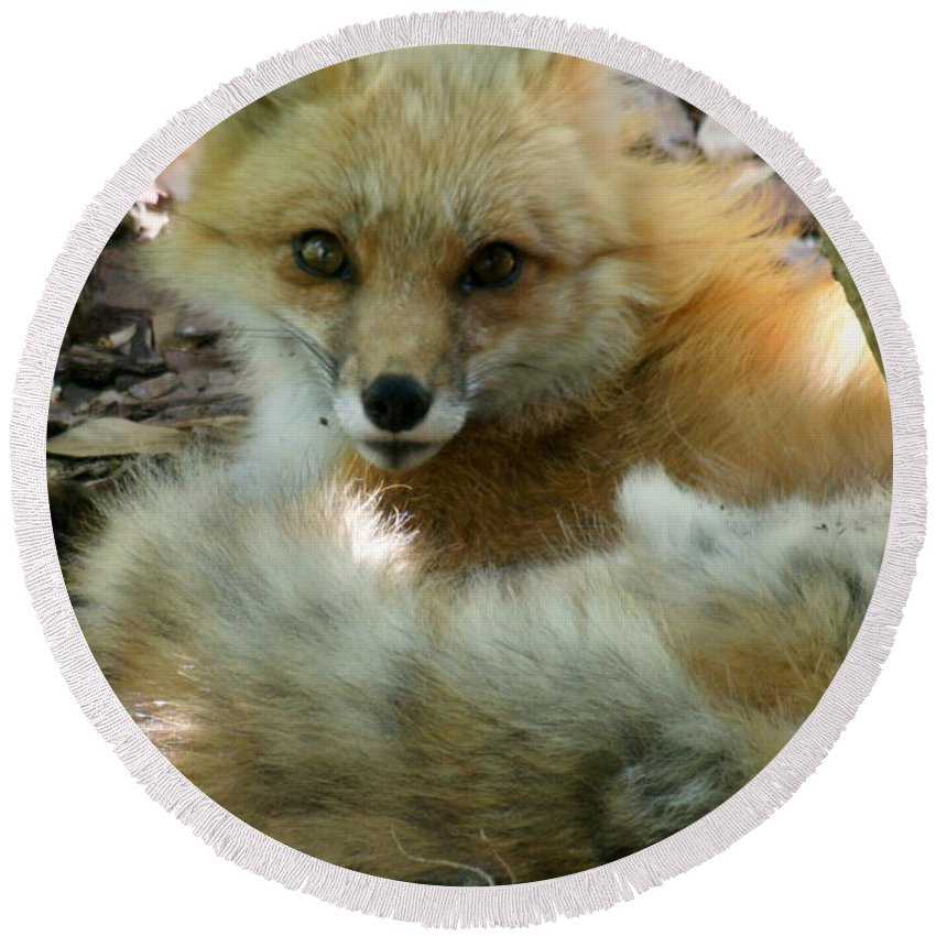 Fox Round Beach Towel featuring the photograph Uh Oh Thought The Fox by Larry Allan