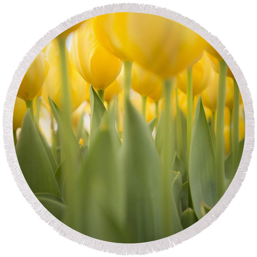 Sunshine Round Beach Towel featuring the photograph Under Yellow Tulips by Lori Grimmett