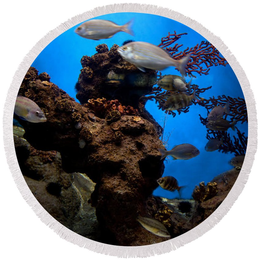 Fish Round Beach Towel featuring the photograph Underwater View by Michal Bednarek