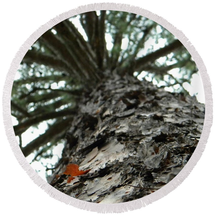 Up Round Beach Towel featuring the photograph Up Pine by Nathanael Smith