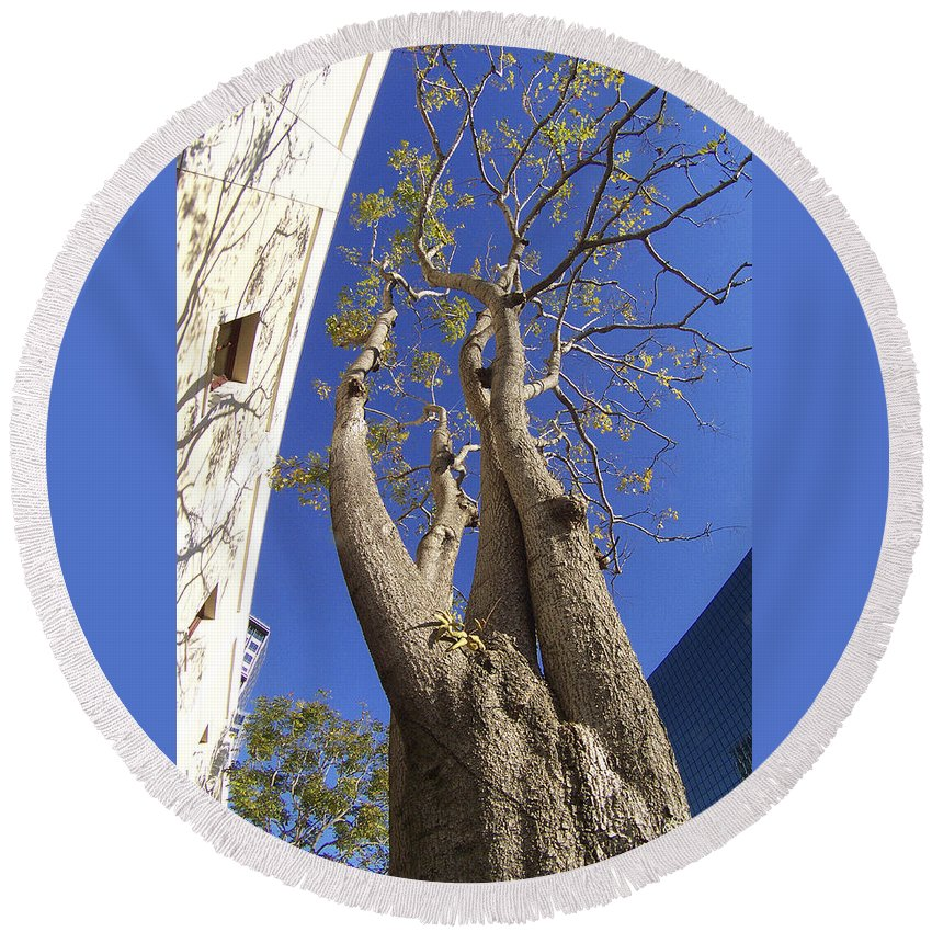 Tree Round Beach Towel featuring the photograph Urban Trees No 1 by Ben and Raisa Gertsberg
