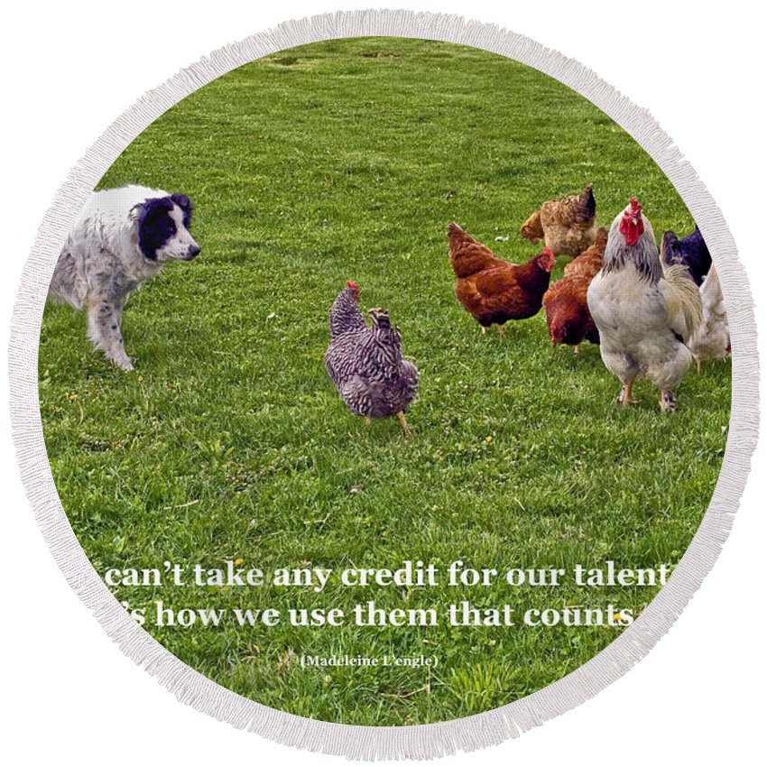 Border Collie Dog Herding Rooster & Chickens Round Beach Towel featuring the photograph Using Talents by Sally Weigand