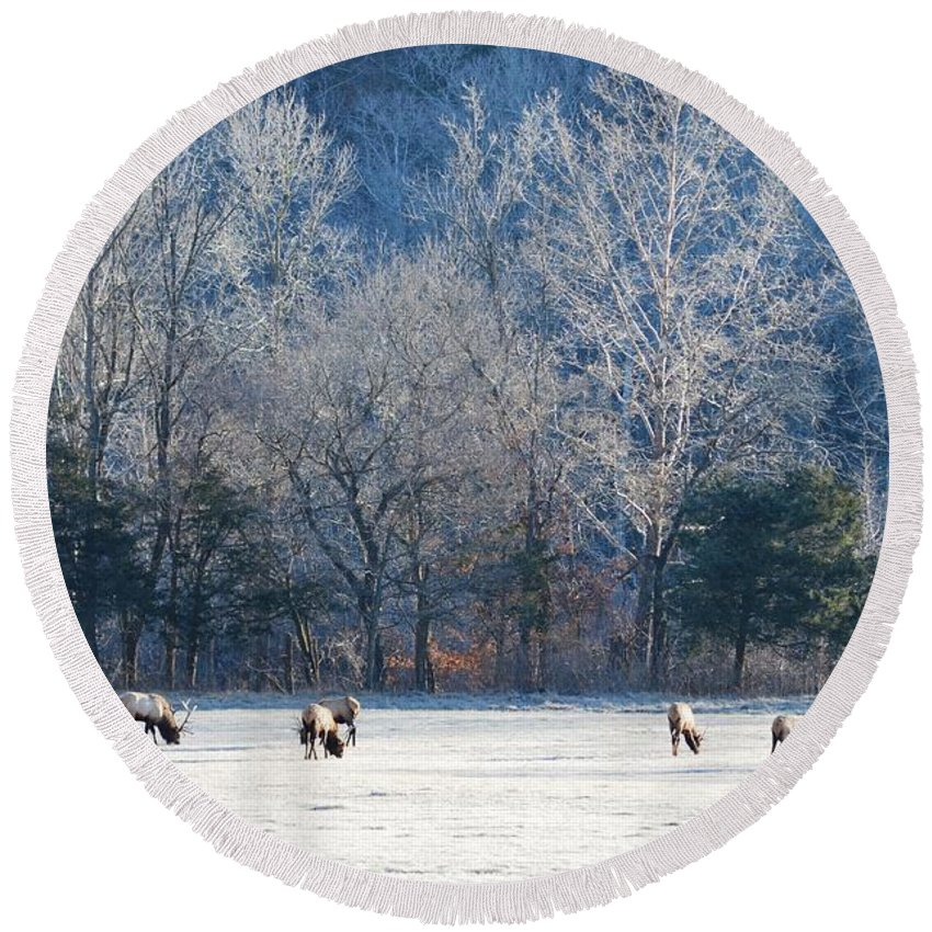 Elk Round Beach Towel featuring the photograph Valley Of Elk by Deanna Cagle
