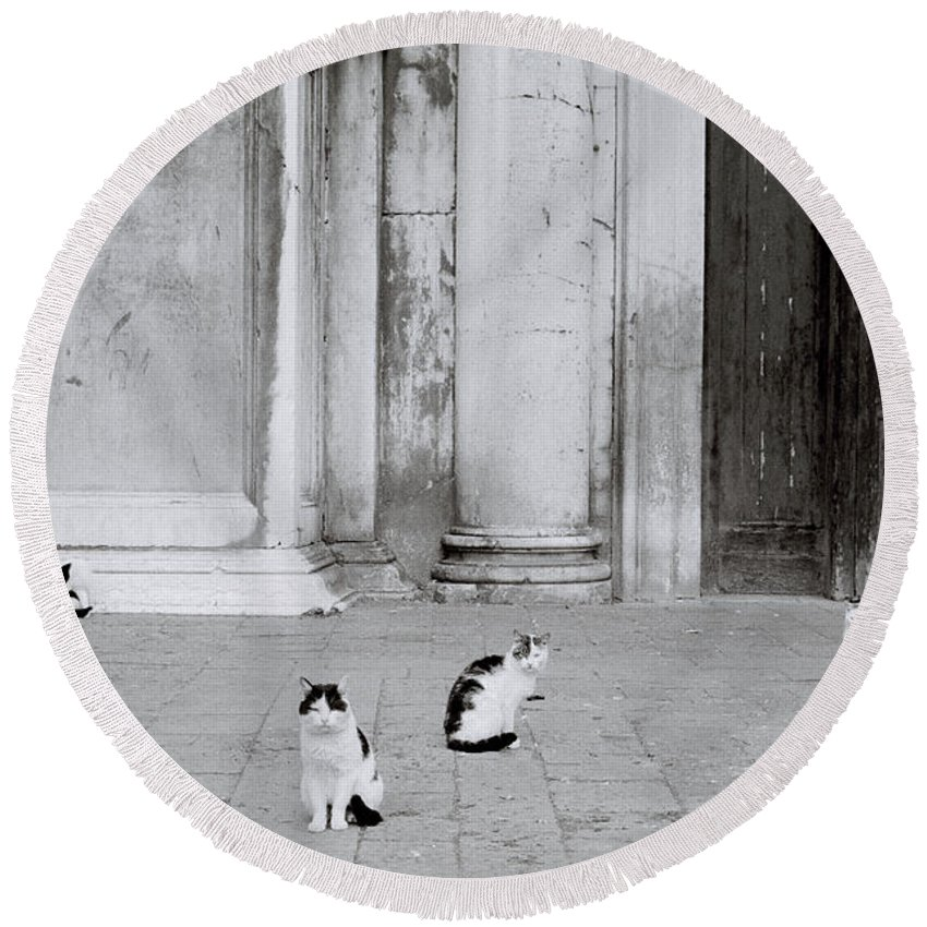 Cat Round Beach Towel featuring the photograph Cats Of Venice by Shaun Higson