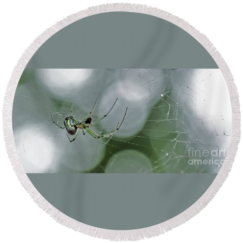 Insect Round Beach Towel featuring the photograph Venusta Orchard Spider by Donna Brown