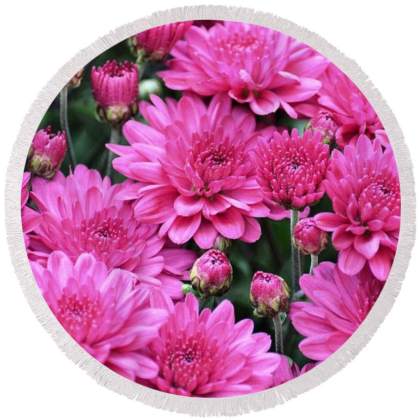 Vibrant Pink Mums Round Beach Towel featuring the photograph Vibrant Pink Mums by Maria Urso