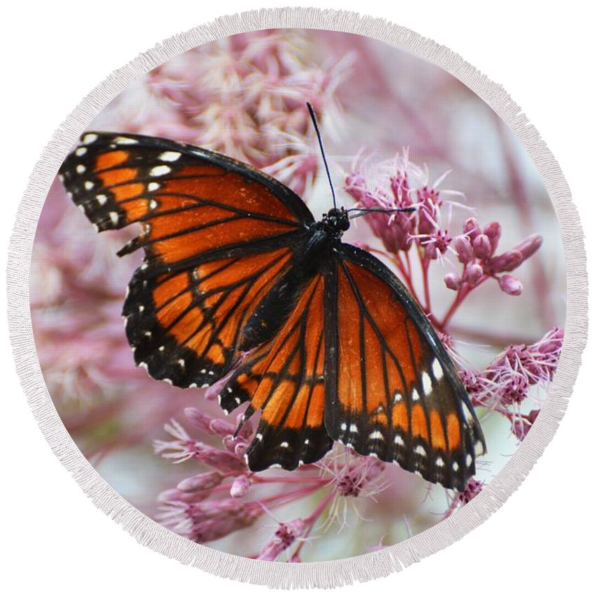 Butterfly Round Beach Towel featuring the photograph Viceroy Butterfly by Cindy Manero