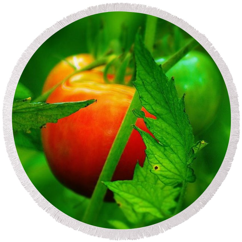 Tomato Round Beach Towel featuring the photograph Vine Ripened by Daniel Thompson
