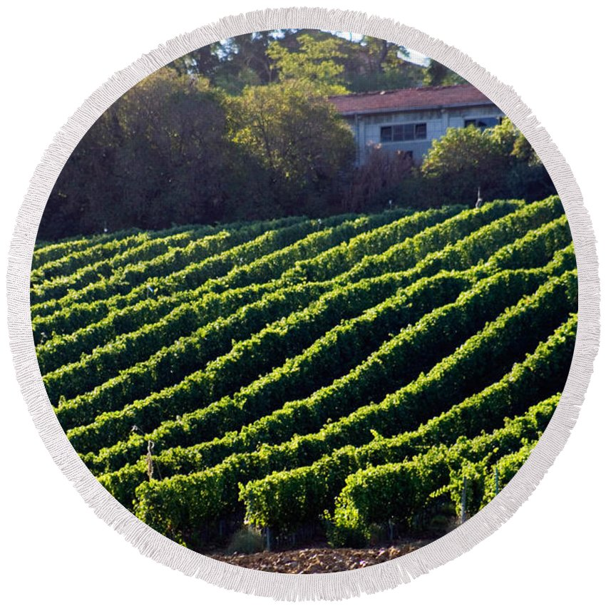 Plant Round Beach Towel featuring the photograph Vineyard by Tim Holt
