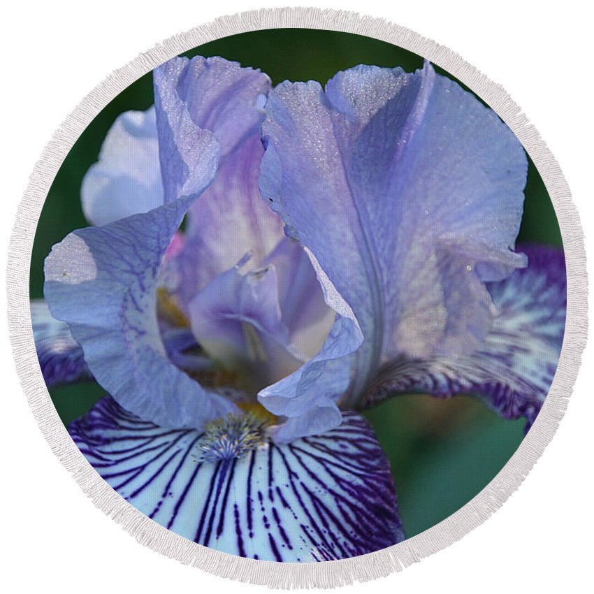Flower Round Beach Towel featuring the photograph Violet Lines by Susan Herber
