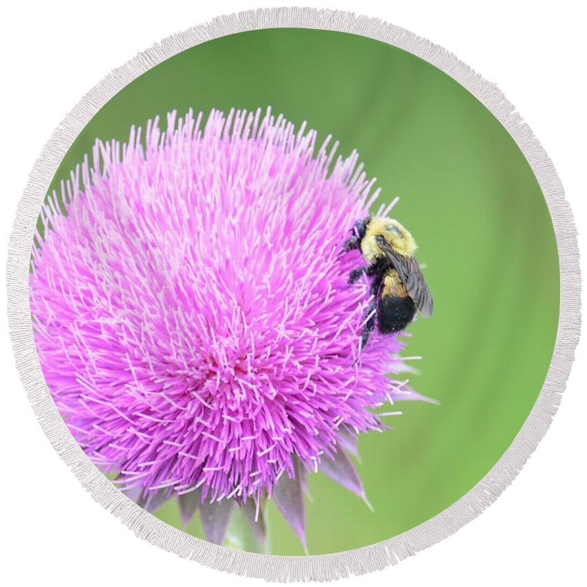 Visitor On Thistle Round Beach Towel featuring the photograph Visitor On Thistle by Maria Urso