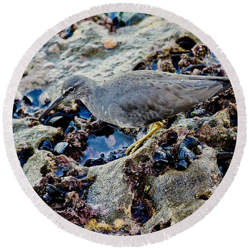 Animal Round Beach Towel featuring the photograph Wadering Tattler At Low Tide by Anthony Mercieca