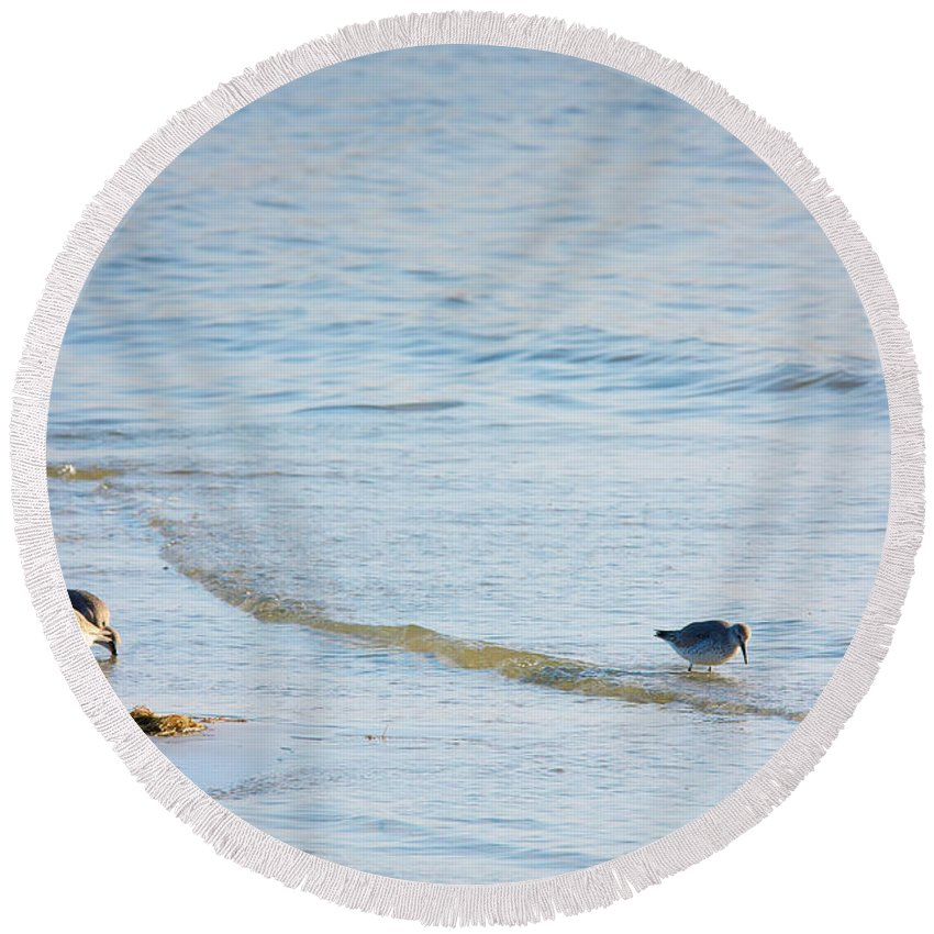 Animal Round Beach Towel featuring the photograph Waders Walking The Beach. by Jan Brons