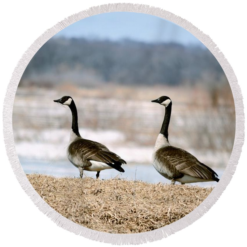 Geese Round Beach Towel featuring the photograph Waiting On Spring by Bonfire Photography