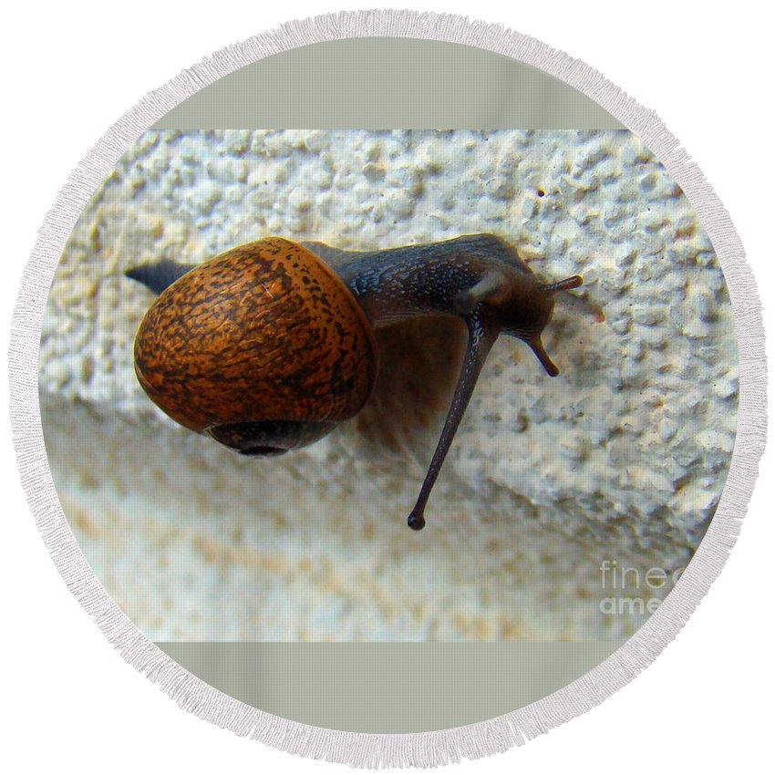 Garden Snail Round Beach Towel featuring the photograph Wall Snail 1 by Nancy L Marshall