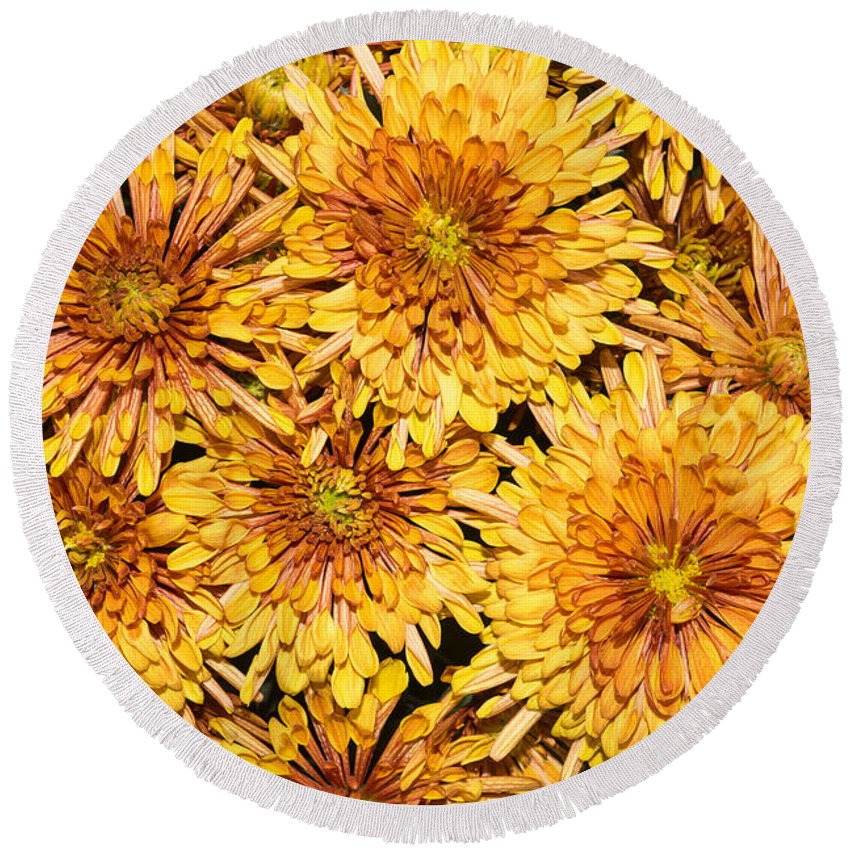 Chrysanthemum Round Beach Towel featuring the photograph Warm And Sunny Yellows Golds And Oranges by Georgia Mizuleva
