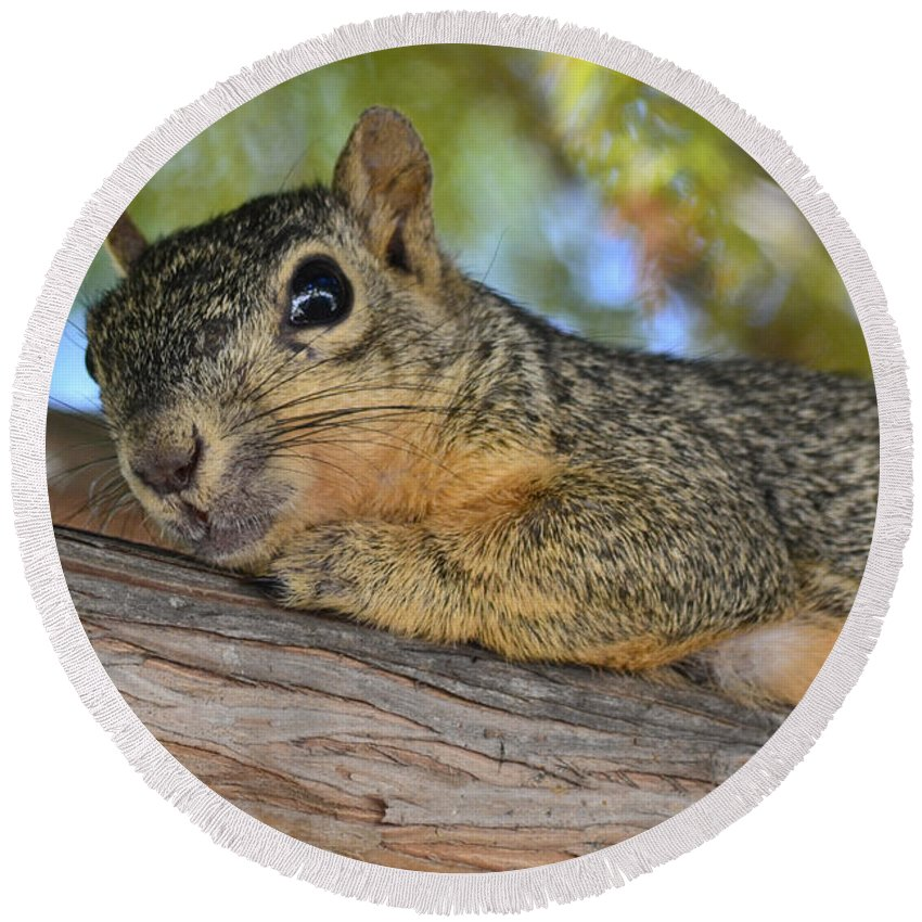Squirrel Round Beach Towel featuring the photograph Wary Squirrel by Allen Sheffield